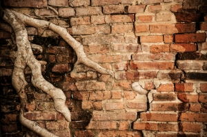 Old cracked brick pipe with tree roots intruding